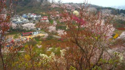 20070413_hanamiyama_03_3