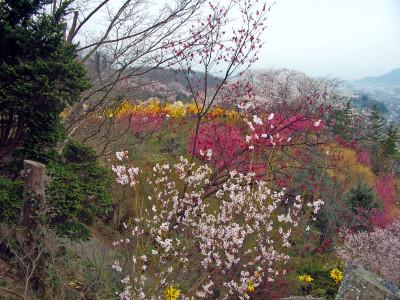 20070413_hanamiyama_04
