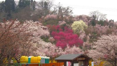 20070413_hanamiyama_07
