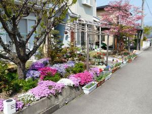 2008_niwa_zenkei