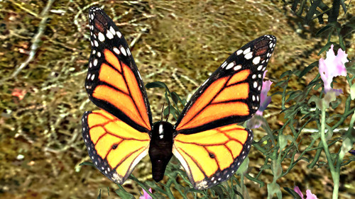 Lepidoptera_of_skyrim_01