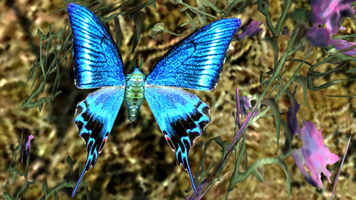 Lepidoptera_of_skyrim_02