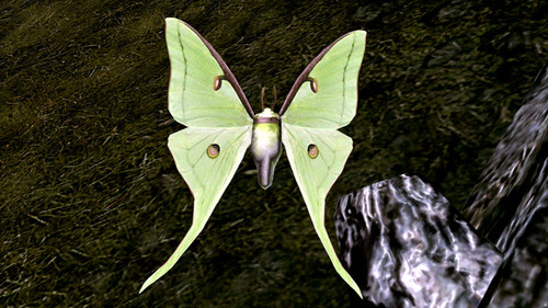 Lepidoptera_of_skyrim_03