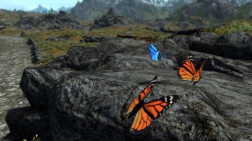 Lepidoptera_of_skyrim_04